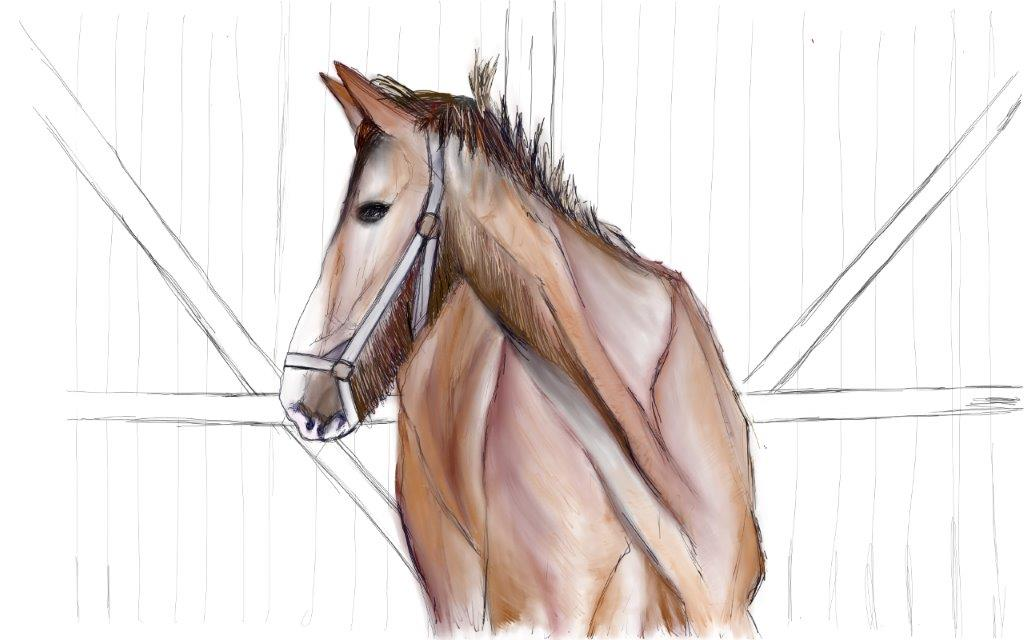 Mustang/Horses
