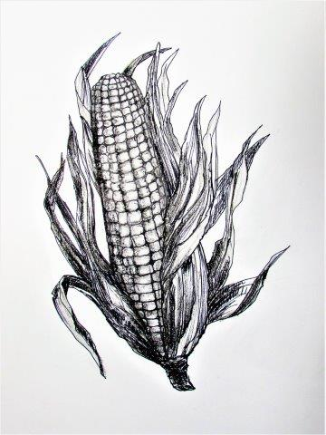 Thanksgiving : Corn On the Cob